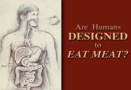Are humans designed to eat meat Size260