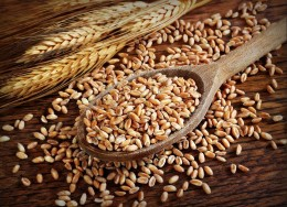 Wheat on a spoon Custom