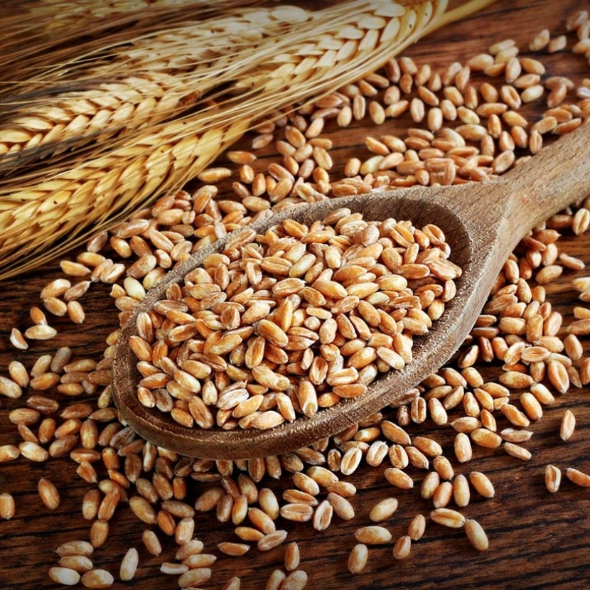 Phytic Acid in Grains? No Problem!