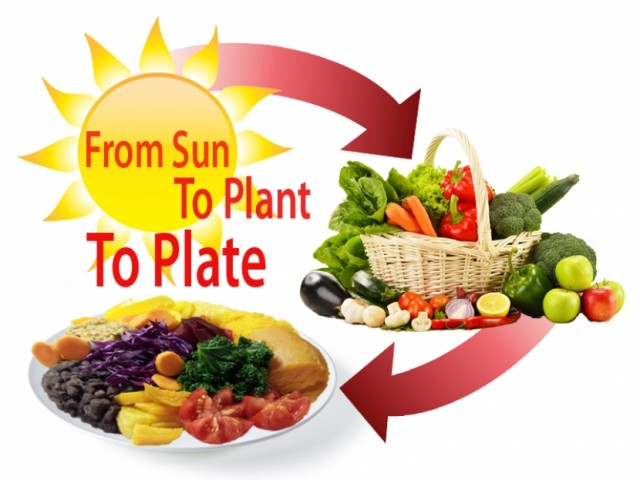 From Sun to Plant to Plate