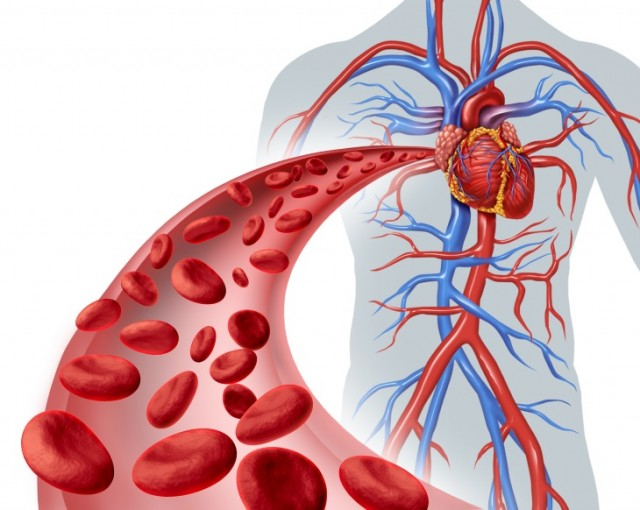 Antioxidant-Rich Foods Dilate Arteries