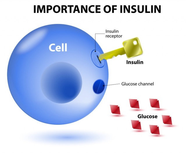 How Insulin Works Diagram