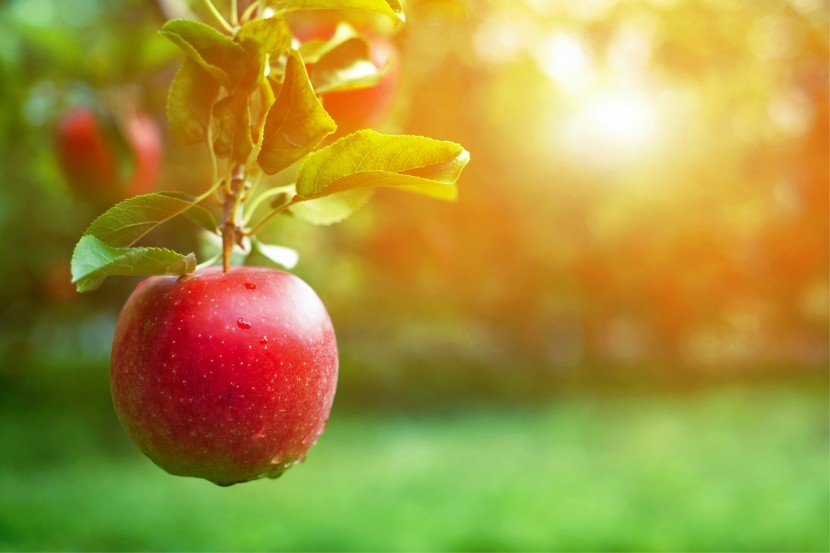 An Apple a Day Keeps Colorectal Cancer Away?